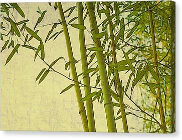 Zen Bamboo Abstract I Canvas Print by Marianne Campolongo
