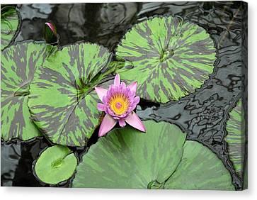Zen Lotus  Canvas Print