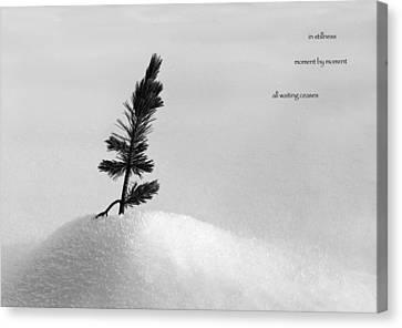 Canvas Print featuring the photograph Zen Wisdom Stillness by Peter v Quenter