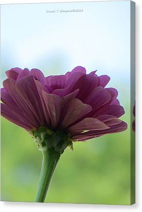Zinnia Dream Canvas Print by Sonali Gangane