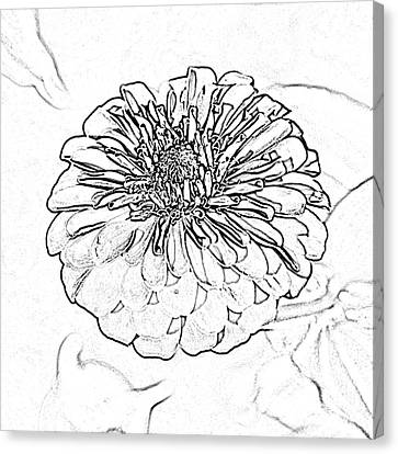 Zinnia Flower Floral Decor Macro Closeup Square Format Black And White Sketch Digital Art Canvas Print by Shawn O'Brien