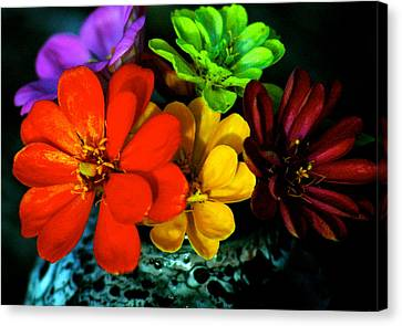 Canvas Print featuring the photograph Zinnias by Lehua Pekelo-Stearns