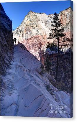 Zion National Park Hiker Climbs Hidden Canyon Trail Canvas Print by Gary Whitton