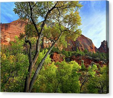 Zion National Park Canvas Print - Zion National Park Valley Floor, Utah by Tim Fitzharris