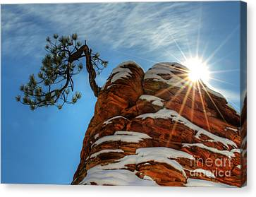 Thelightscene Canvas Print - Zion National Park Sacred Earth 2 by Bob Christopher