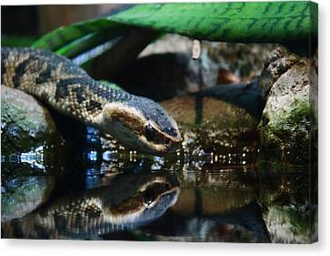 Canvas Print featuring the photograph Zoo 039 by Andy Lawless