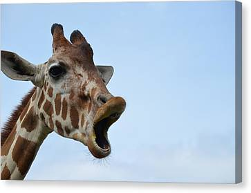 Zootography Giraffe Honking Canvas Print by Jeff at JSJ Photography