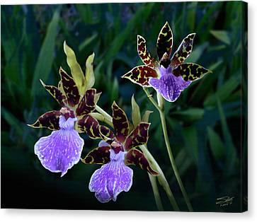Zygopetalum Orchid Canvas Print by IM Spadecaller