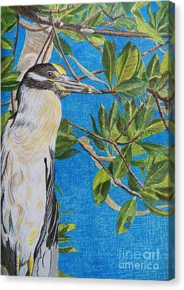 Yellow Crested Night Heron Painting Canvas Print by Judy Via-Wolff