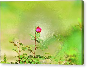 A Rose  Canvas Print by Gib LaStrapes