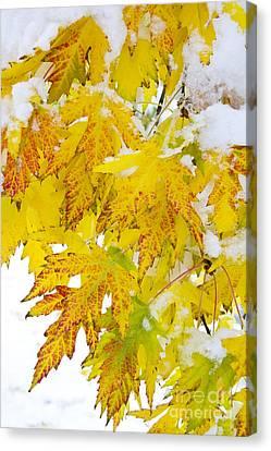 Autumn Snow Portrait Canvas Print by James BO  Insogna