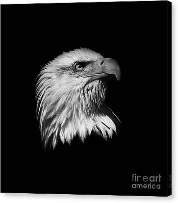 Black And White American Eagle Canvas Print by Steve McKinzie