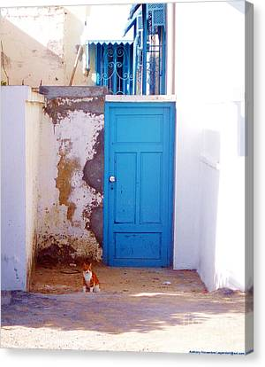 Blue Door Cat Canvas Print by Anthony Novembre