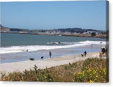 California Beach Canvas Print by Carolyn Donnell