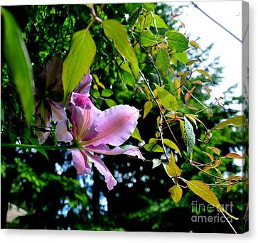 Canvas Print featuring the photograph  Clematis Flower by Tanya  Searcy