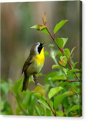 Canvas Print featuring the photograph  Common Yellowthroat Warbler Warbling Dsb006 by Gerry Gantt