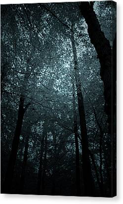 Dark Forest Silhouetted Against Sky Canvas Print