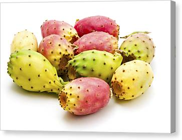 Fruits Of Opuntia Ficus-indica  Canvas Print by Fabrizio Troiani