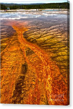 Grand Prismatic Spring In Yellowstone National Park - 02 Canvas Print by Gregory Dyer