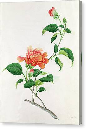 Hibiscus Canvas Print by Georg Dionysius Ehret
