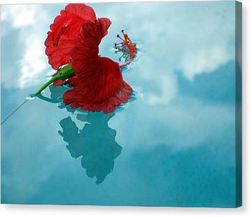 Hibiscus Reflections Canvas Print