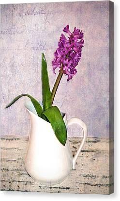 Hyacinth Canvas Print by Kathy Jennings