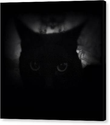 ♞ #ig_m || Luna ||| Canvas Print