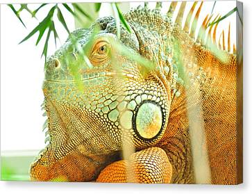 Iguana Canvas Print by Puzzles Shum