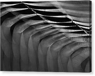 Light Web Canvas Print by Odon Czintos
