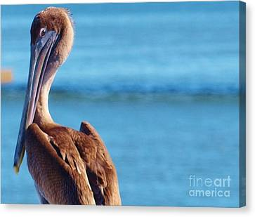 Look At You Canvas Print
