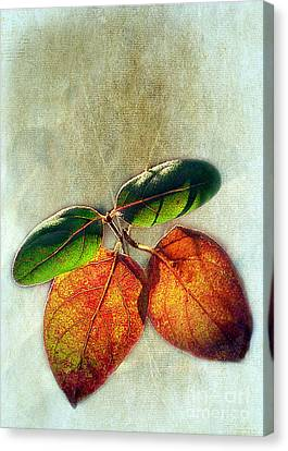Memory Of Leaves Canvas Print by Judi Bagwell
