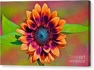 Digital Sunflower Canvas Print -  Orange Flowers In Their Buttonholes by Gwyn Newcombe