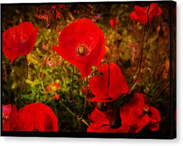Canvas Print featuring the photograph  Poppies by Beverly Cash