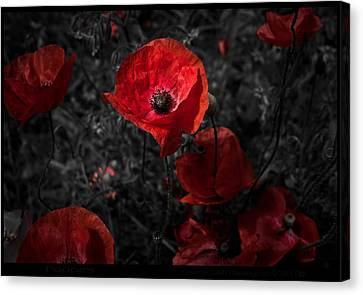 Canvas Print featuring the photograph  Poppy Red by Beverly Cash