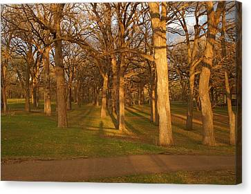 Shadows In The Park Canvas Print by Ron Read