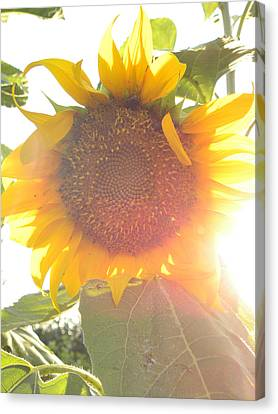 Canvas Print featuring the photograph  Sun Flower by Nada Meeks