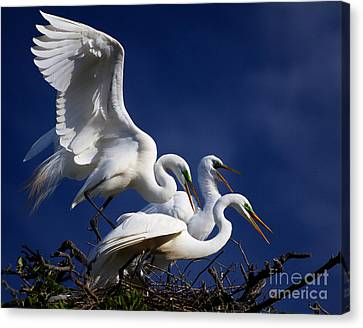 The Gathering Canvas Print by Richard Burr