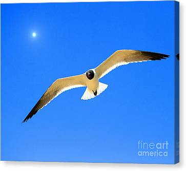 To The Sun And Back Canvas Print by Richard Burr
