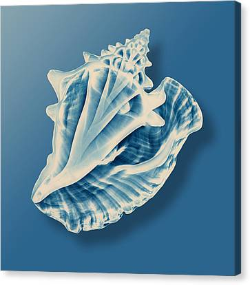 X-ray Of A Conch Shell Canvas Print