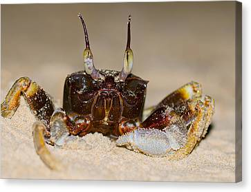 A Crab On The Shore  Canvas Print by Ulrich Schade