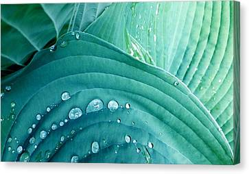After The Rain Canvas Print by Carolyn Repka