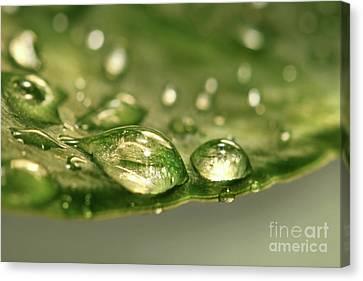 After The Rain Canvas Print by Sandra Cunningham
