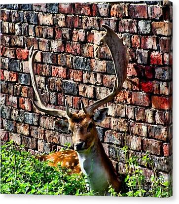 Against The Wall Canvas Print by Isabella F Abbie Shores FRSA