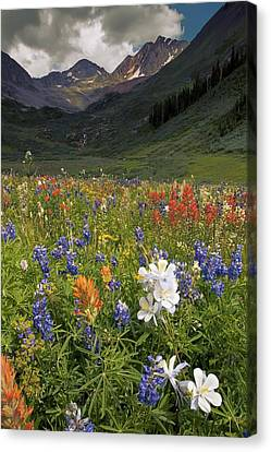 Alpine Flowers In Rustler's Gulch, Usa Canvas Print by Bob Gibbons