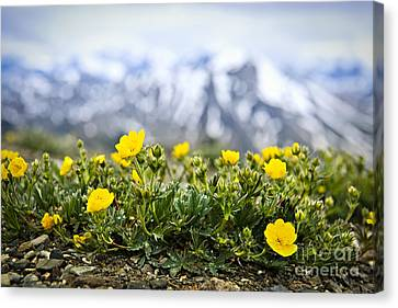 Alpine Meadow In Jasper National Park Canvas Print