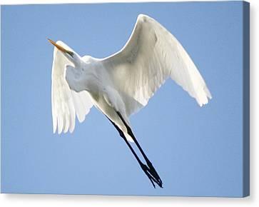 Angel Wings Canvas Print by Paulette Thomas