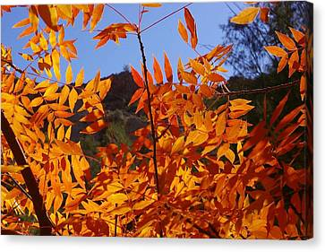 Arizona Fall Canvas Print