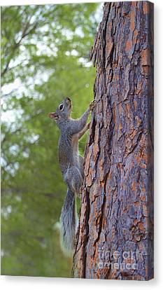 Arizona Grey Squirrel Canvas Print by Donna Greene