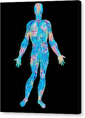 Artwork Of The Human Venous System (from Vesalius) Canvas Print by Mehau Kulyk