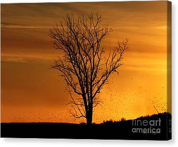 At End Of Day II Canvas Print by Rhonda Strickland